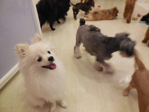 犬の保育園presea10犬(6)