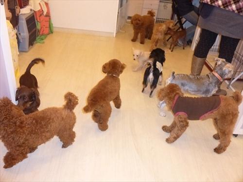 犬の保育園presea5犬(1)