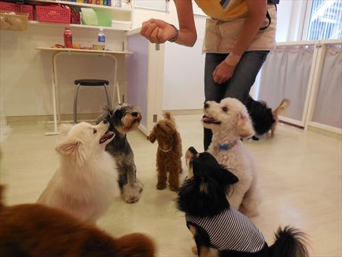 犬の保育園presea6犬(2)