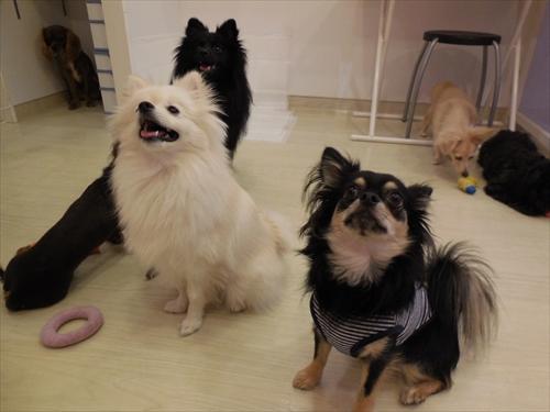 犬の保育園presea7犬(3)