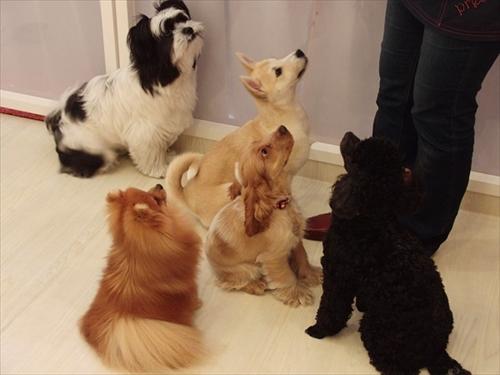 犬の保育園presea9犬(5)
